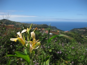 Walking in Madeira - Ilha to Santana